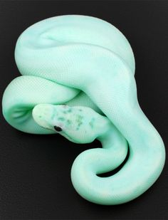 snake (is seafoam green or blue?) Love the color!