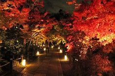 哲学の道界隈は、周囲の古い建物と疎水の両岸の桜並木が美しく、日本の道百選の一つです。