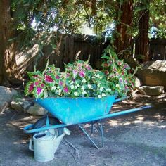 """Jane Krauter brightens up a shady corner of her garden with her bright blue wheelbarrow filled to the rim with impatiens. She says, """"Last April, I found the blue wheelbarrow and the old wooden chair on the side of the road! I planted right in it, …it took lots of potting soil!"""