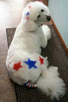 -Repinned-Patriotic. Fourth of July creative grooming.