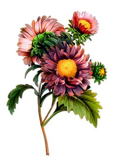 September birth flower... Could do this with daffodils and chrysanthemums for me and my parents