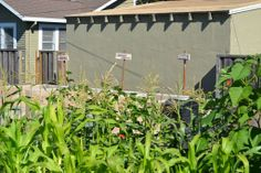 SCU composts, do you?