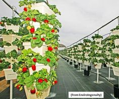 Image result for planting in levels