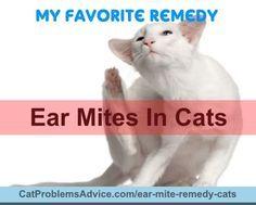 Ear Mite Remedy Cats Symptoms Treatments Natural Remedies For Mites Cats Cat Ear Mites Cat Symptoms