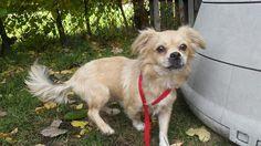 1000+ images about CRAIGSLIST ANIMALS NEED SAVING TOO! on ...