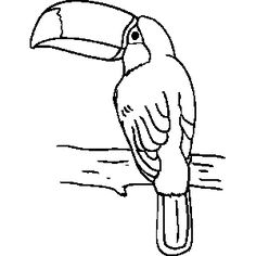 Free Coloring Sheets In . Toucan Template   Google Search