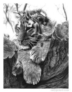 incredible pencil drawing