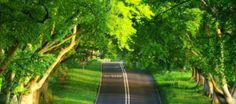 amazing-road-to-forest-wallpapers -HD