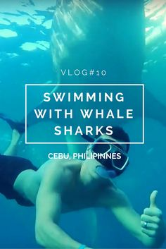 VLOG #10 - Swimming with WHALE SHARKS in Cebu, Philippines was the highlight of…