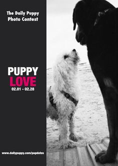 If your puppy is your best friend, sidekick or confidant, show us and we'll feature one 'Puppy Love' Woof of the Week every Friday in February! #PuppyLove