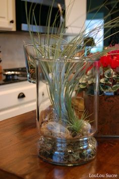 air plant in apothecary jar