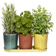 Herbs in pots from Svenskt Tenn Josef Frank, Eclectic Living Room, Living Spaces, Interior Design Companies, Green Plants, Herb Garden, Ceramic Pottery, Contemporary Style, House Plants