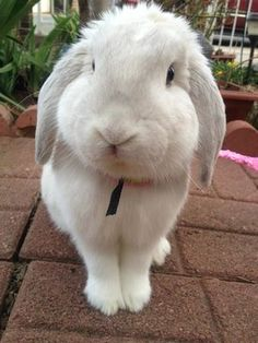 Guys, seriously. Pet Bunnies are the best. They are so loving and adorable.