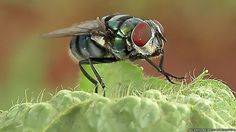 Flies' disease-carrying potential may be greater than previously thought, say US researchers.  You don't say?