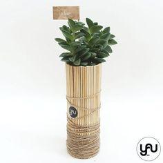 MARTURII plante suculente in suport din lemn si sfoara - M4 - https://www.yau.ro/collections/marturii-nunta-si-botez?page=1 - yauconcept - elenatoader