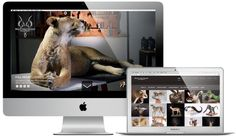 Splitting Image Taxidermy marketing campaign. LIKE us on Facebook and share our passion for wildlife artistry.