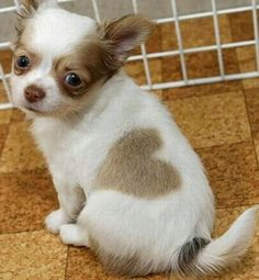 5 Pets with strange and Amazing Markings | The Planet of Pets