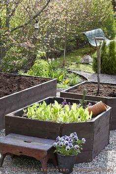 Backyard raised garden - I really like these extra deep raised beds!