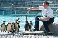 Giraffes and Penguins enjoy canapés at ZSL London Zoo. http://www.demotix.com/news/2263318/giraffes-and-penguins-enjoy-canap-s-zsl-london-zoo#media-2263389