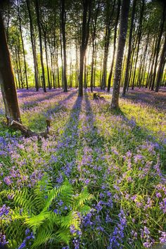 49 Ideas nature spring summer wild flowers for 2019 Beautiful World, Beautiful Places, Beautiful Pictures, Beautiful Forest, Beautiful Scenery, Magical Forest, Animals Beautiful, Belle Image Nature, Landscape Photography
