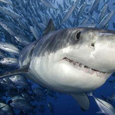 ¿Conoces a los animales acuáticos más temidos? Descúbrelos en nuestro ranking en http://blog.viva-aquaservice.com/2013/03/22/conoces-a-los-animales-acuaticos-mas-temidos/