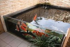 These above ground koi pond with window ideas will totally inspire you to bring your backyard into a whole new style! Above Ground Pond, Indoor Pond, Raised Pond, Koi Pond Design, Aquarium Garden, Amazing Aquariums, Goldfish Pond, Pond Water Features, Pond Waterfall