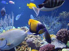 Internet dating vis in de zee Walthamstow dating online