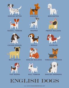 """forkingandempire:  """"Were is the Wolfhound, Red Setter, Collie and Labrador to name but a few  """""""