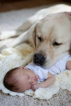 dog watches over cute baby sleeping