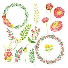 Watercolor Ranunculus by Verdigris Studios on Creative Market   $6.