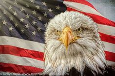 All American Bald Eagle and American Flag composite. Abstract Nature, Photo On Wood, Wildlife Photography, Bald Eagle, American Flag, Bird, Woods, Animals, Animales