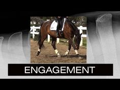 Learn how to properly ENGAGE YOUR HORSE'S BACK through gymnastic stretches. www.EquitopiaCenter.com presents Art 2 Ride trainer Karen Loshbaugh and Equine Ve...