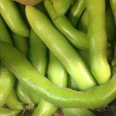Broad beans are pretty hard and adaptable - they grow in most soils and climates. They're a great source of protein and carbohydrates, as well as vitamins A, B1 and B2. Availability- at their peak from the end of June to mid September #CSL #countysupplies   #cooks #foodies #foodlovers #fresh #veg #truecooks #instalove #instafood #lovetocook