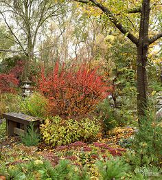Japanese maples, a standard fall stunner, pair beautifully with the reds of viburnum and sedum, while drawf evergreens provide a balance of green./