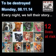 Only has till noon then MURDERED BY DEMONS @MayorDeblasio @NYCACC #NYSHAME #DEATHROW #DOGS #adopt #rescue #foster pic.twitter.com/INp69xO6Pc