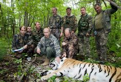 Putin tags a Siberian tiger while visiting the Barabash tiger reserve in Eastern Siberia on Nov. 23, 2010.
