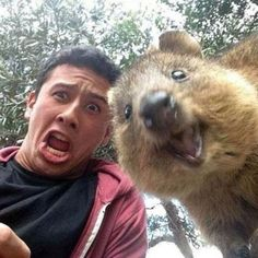 Selfies with the quokka. Haha!