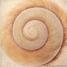 Spiral shell photograph