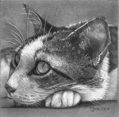 Puuuurrrrfect...pencil drawing....sorry couldn't read the artists name or find it  :(