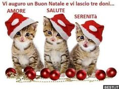 Cute kittens and puppies wearing Christmas hats Cat Christmas Ornaments, Christmas Kitten, Christmas Hat, Christmas Animals, Merry Christmas, Christmas 2014, Magical Christmas, Christmas Wishes, Cute Kittens