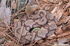 Snake Safety | SREL Herpetology