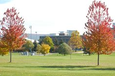 This was my dorm! Fell in love with my hubby playing flag football in the common area. He tackled me when we were on the same team. :-) -- East Halls (Penn State Main Campus) flanked by brilliant trees