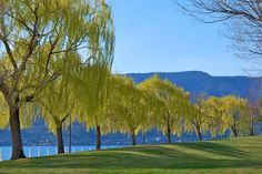 Kelowna Waterfront Park in British Columbia -- Curated by Misfeldt Accounting | #105 - 1626 Richter Street, Kelowna, BC V1Y 2M3 Canada | (250) 860-5882
