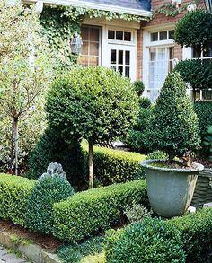 Boxwoods + topiary