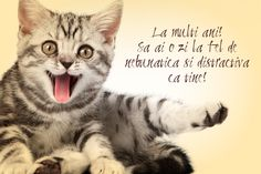 Congratulations to many kittens- Felicitare la multi ani pisicuta Congratulations to many kittens - Happy Birthday 1, Princess First Birthday, Happy Birthday Quotes, Birthday Wishes, Ballet Painting, Motivational Quotes, Funny Quotes, Cool Words, Congratulations