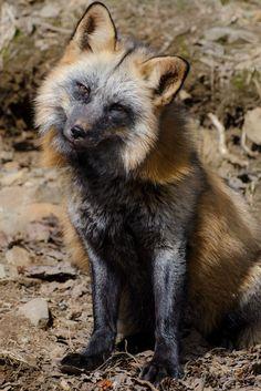 Kroschel Wildlife Center (DBA Kroschel Films) | Not a Zoo - It's an Experience
