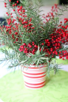 Rosemary sprigs and berry branches in a candy striped container.  since this was a repin just want to let you know the link takes you to blog, could not find this project but its easy enough.