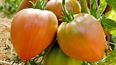 die besten 25 tomatend nger ideen auf pinterest d nger f r tomaten fl ssigd nger und. Black Bedroom Furniture Sets. Home Design Ideas