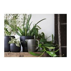 On August SINNERLIG will enliven collection for IKEA. This is the result of a unique collaboration between IKEA and designer Ilse Crawford who has been famous in the world Green Plants, Potted Plants, Indoor Plants, Diy Interior, Ikea New, Sweet Home, Affordable Furniture, Earthenware, Stoneware