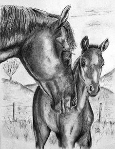 foal sketches | Charcoal drawing Mare and Foal
